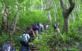 Mt. Daisen Japanese Beech Forest Walking