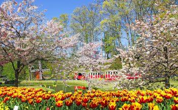 Tottori Prefectural Flower Park