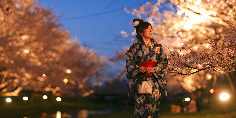 Famous Cherry Blossom Viewing Spots in San'in, Japan
