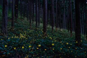 #8 Fireflies