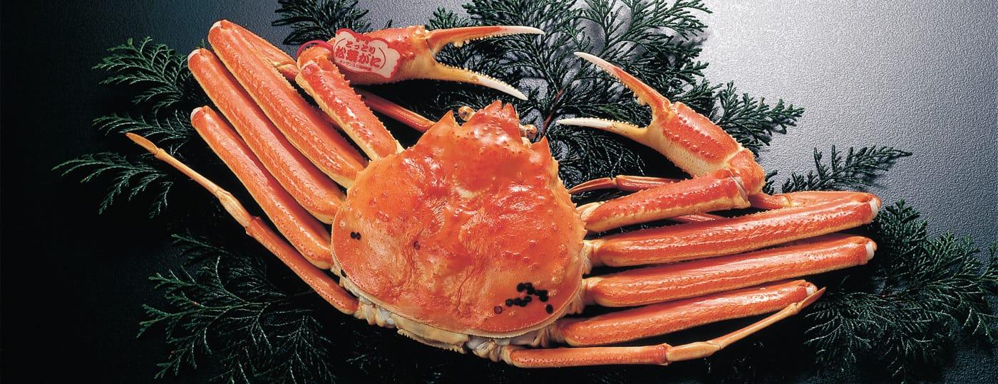 Matsuba crabe