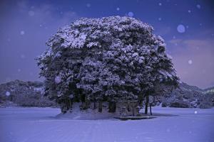 (7) トトロの森に雪が降る