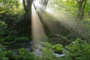 (6) 大山・神秘の森