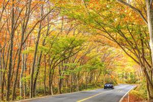 (6) 黄金色の大山ブナ林