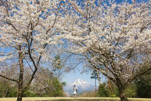 (6) 春の大山
